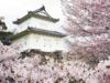 画像: <名城めぐり>『桜の花咲く時期に13名城ぐるっと一度で九州の日本100名城すべてをめぐる 6日間』【名古屋出発】|クラブツーリズム