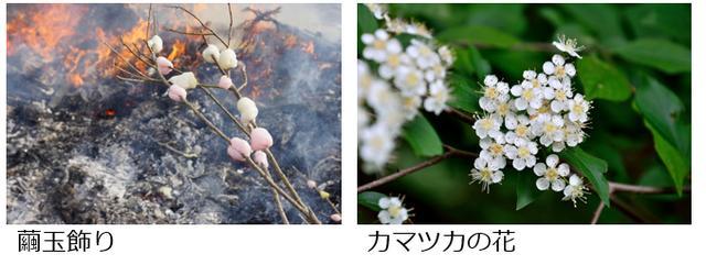 画像1: 植物の名前について