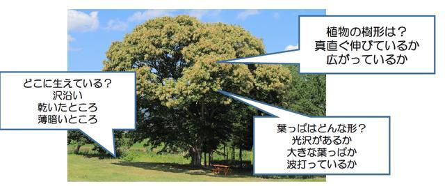 画像1: 野外観察のコツ