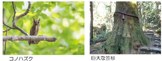 画像: 鳳来寺山の自然