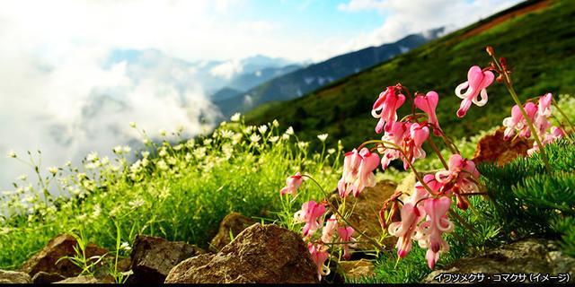 画像: 山の自然教室(ガイド解説学習・初心者歓迎)登山ツアー・旅行 | 国内旅行 | クラブツーリズム