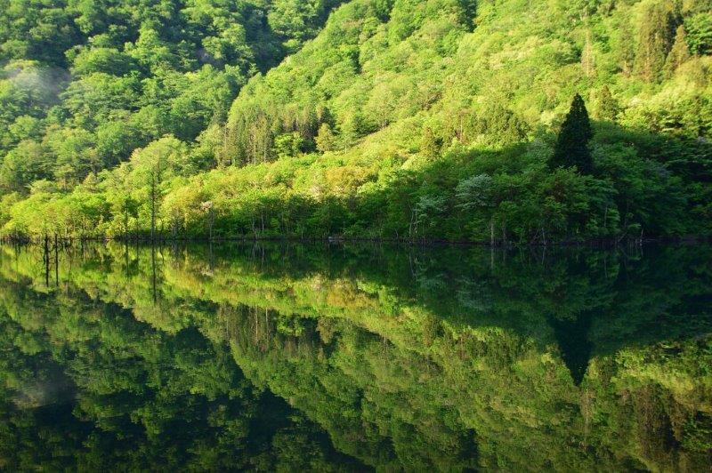 画像: 徳山湖の水鏡に映える新緑と徳山ダム 日帰り【名古屋駅出発】