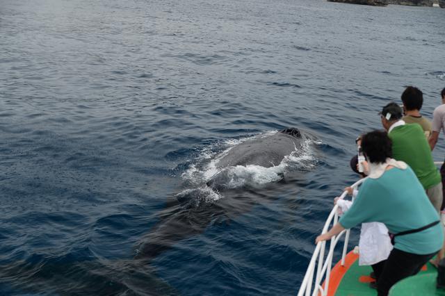 画像: クジラウォッチングの様子