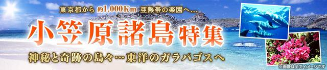 画像: 小笠原諸島ツアー・旅行|クラブツーリズム
