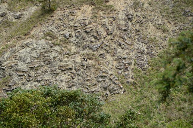 画像: 枕状溶岩と野生化したヤギ