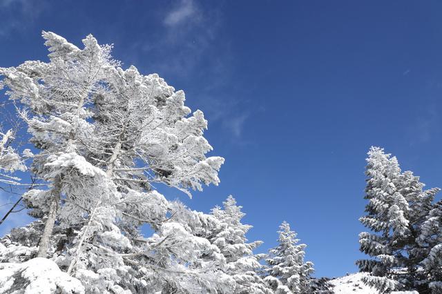 画像: ロープウェイ山頂の樹氷 ※気候により見られない場合があります