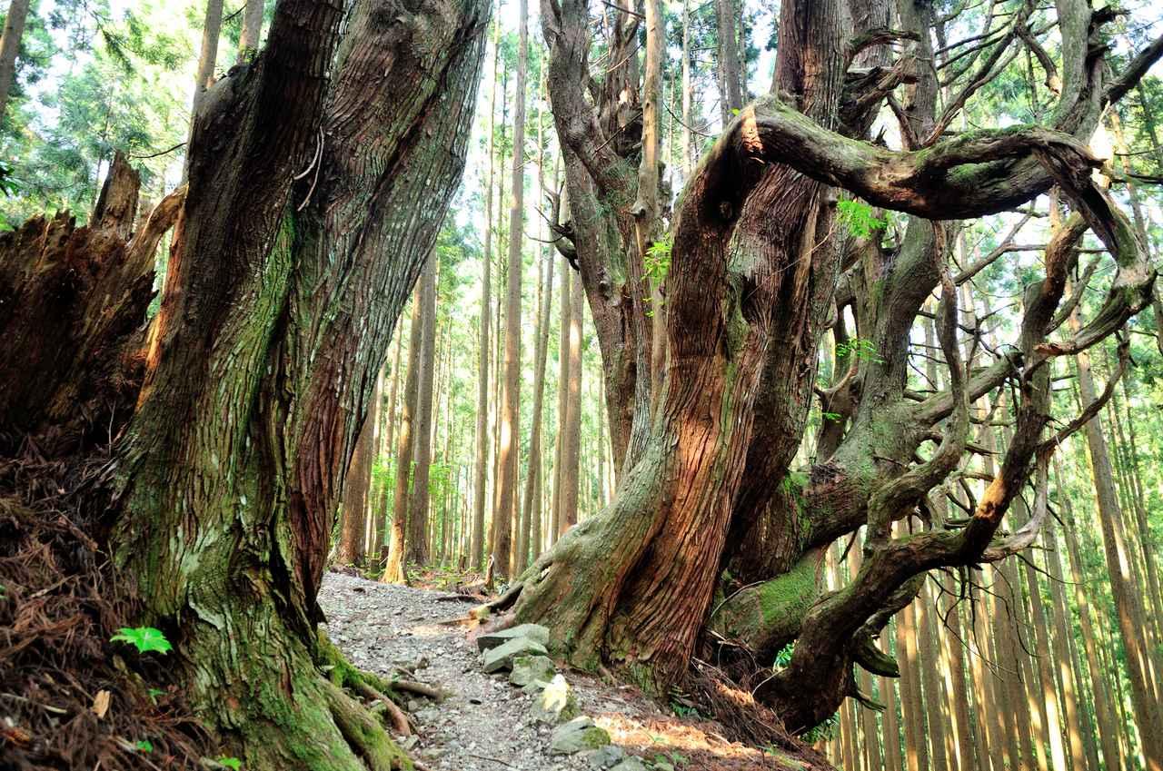 Images : 2番目の画像 - 「自然で遊びながら興味や知識を深めよう!」のアルバム - クラブログ ~スタッフブログ~|クラブツーリズム