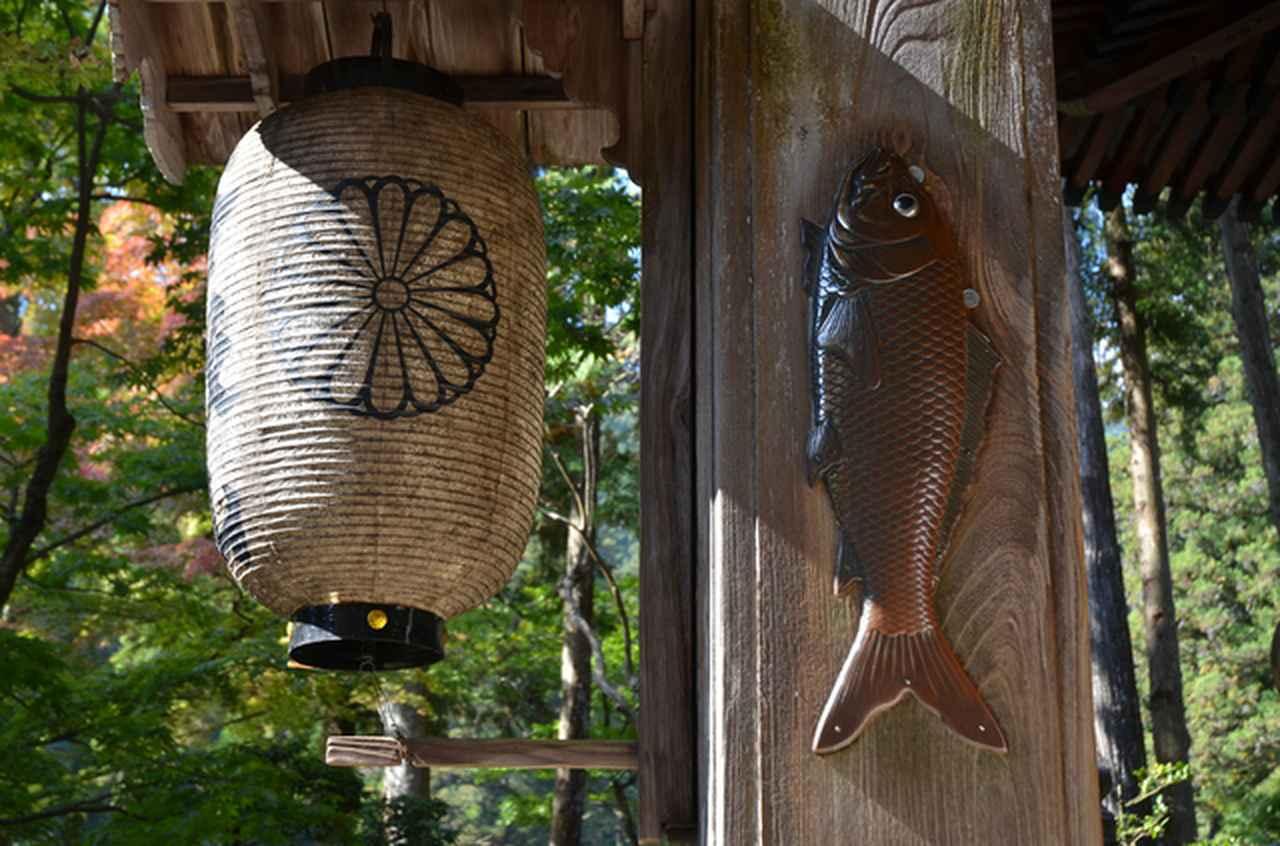 画像: 精進落としの鯉(イメージ)