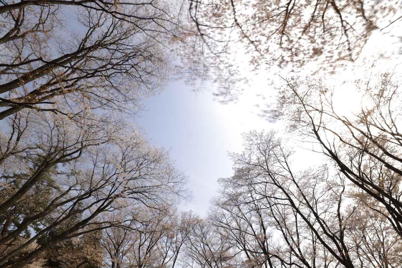 画像3: 白井厚講師撮影作品