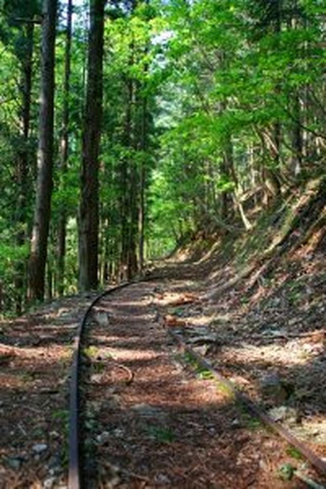 画像: 芦生の森 (京都府南丹市) (京都大学フィールド科学教育研究センター森林ステーション芦生研究林)