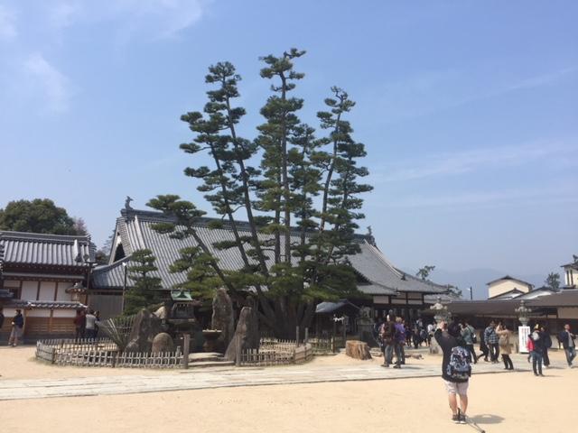 画像: 大願寺