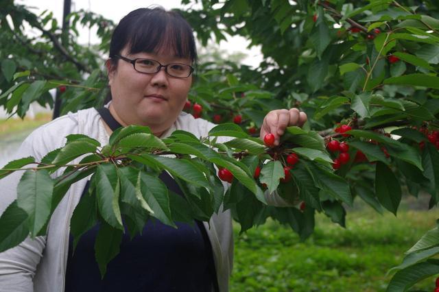 画像: 朝摘みのさくらんぼを食べたくて遥々大分県から来ました! とっても美味しいです。 (大分県からご参加 平野 久美子 様)
