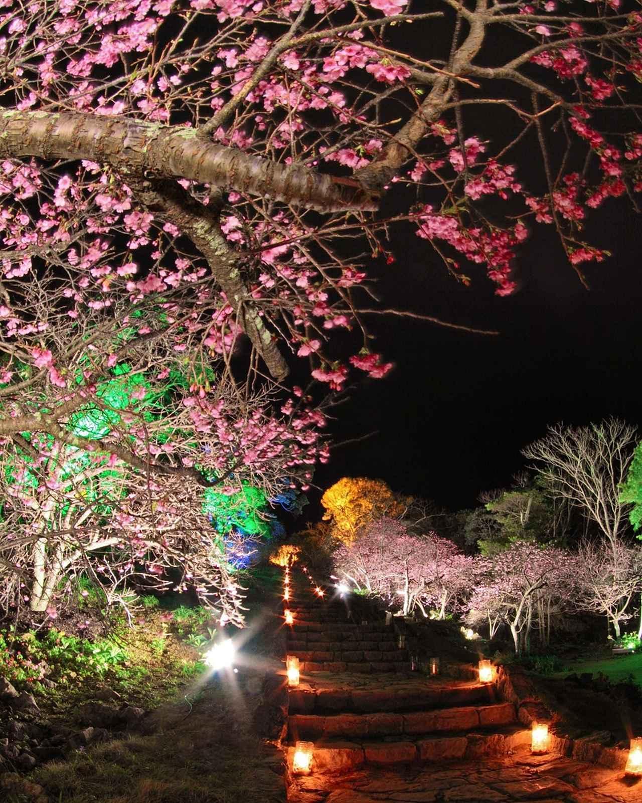 画像: 昨年(2018年2月上旬)のライトアップの様子(今帰仁村提供)