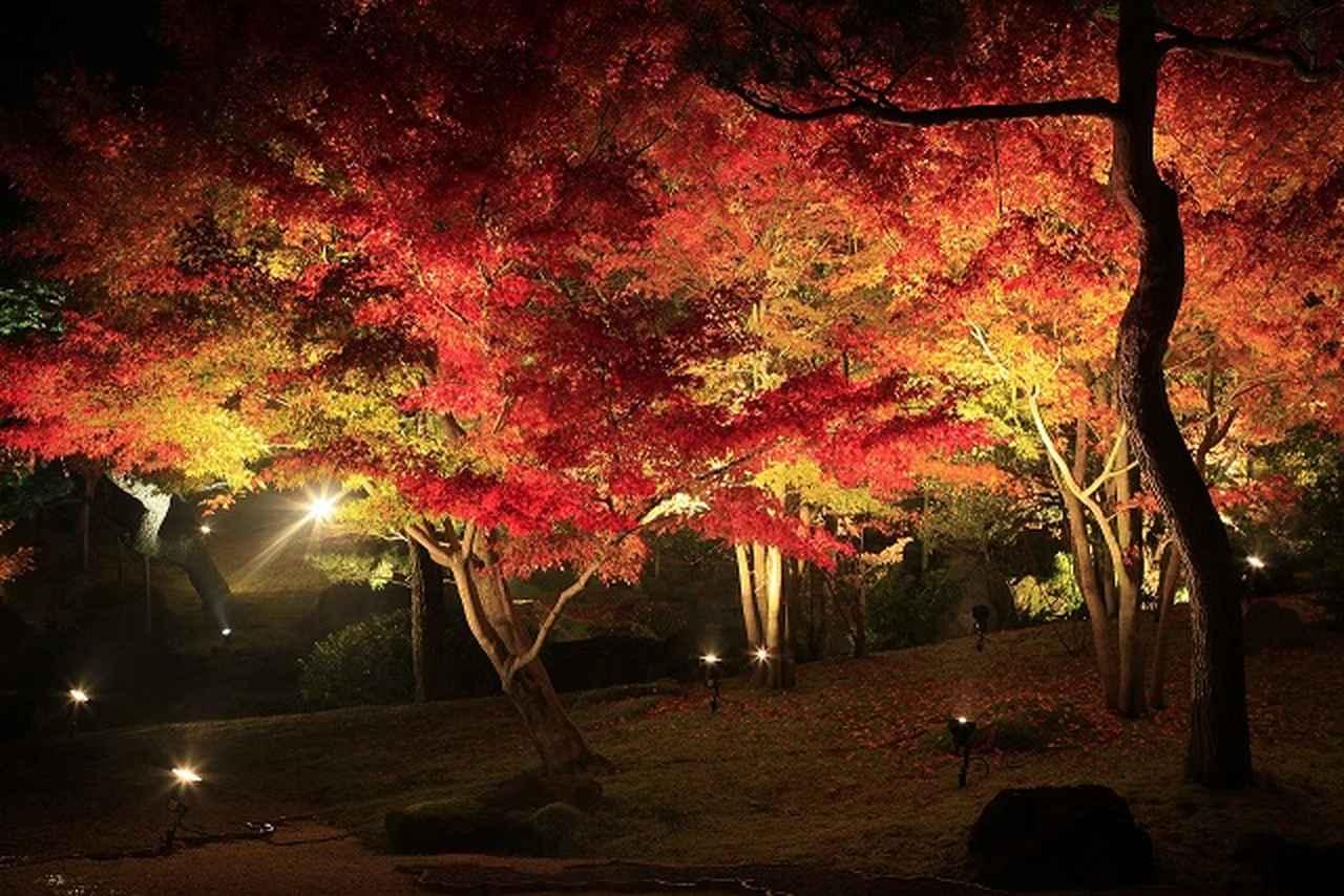 画像: 庭園