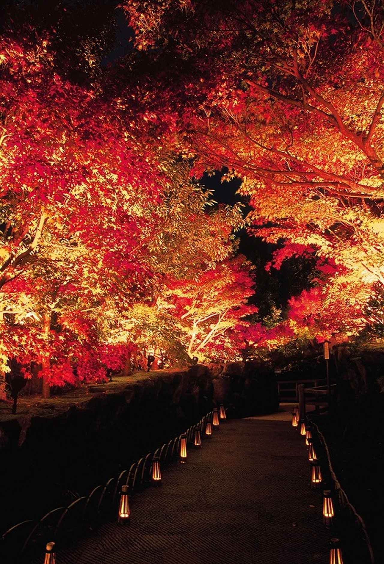 画像: 庭園の道