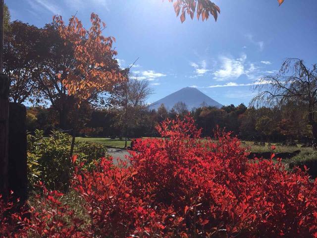 画像1: 【あるく・ハイキングツアー】11月9日~12日出発 紅葉の富士青木ヶ原樹海と紅葉台・三湖台ハイキングについて
