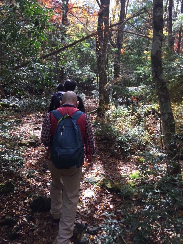 画像3: 【あるく・ハイキングツアー】11月9日~12日出発 紅葉の富士青木ヶ原樹海と紅葉台・三湖台ハイキングについて