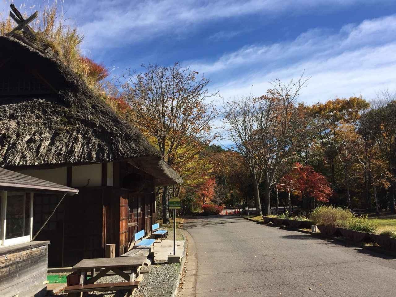 画像2: 【あるく・ハイキングツアー】11月9日~12日出発 紅葉の富士青木ヶ原樹海と紅葉台・三湖台ハイキングについて