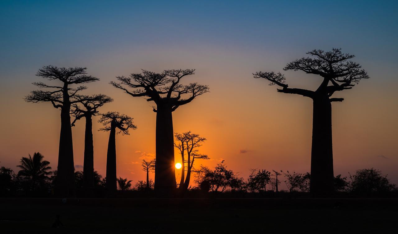 画像: バオバブ並木と夕日