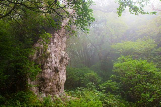 画像: 日本の世界自然遺産「屋久島」(平成5年に認定)
