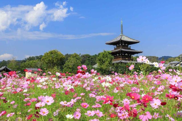 画像: 法起寺