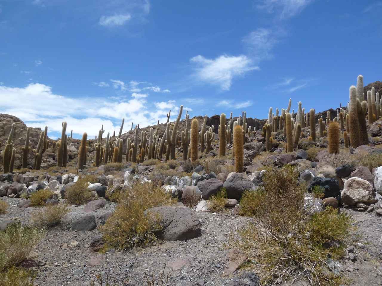 画像1: ボリビア ウユニ塩湖 インカワシ島(イメージ)