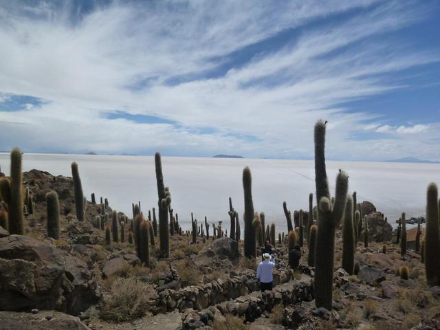 画像2: ボリビア ウユニ塩湖 インカワシ島(イメージ)