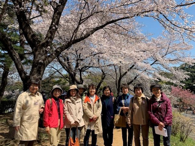 画像: 満開の桜がとてもきれいでした