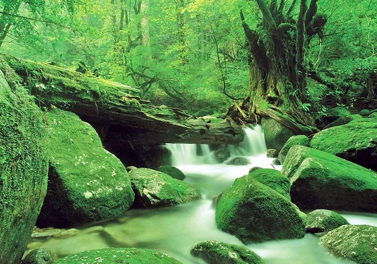 画像: 苔むす美しい水辺の風景が広がる白谷雲水峡
