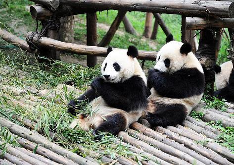 画像: 【03513】<おひとり参加限定の旅> 『1名1室確約 ANA羽田発着 ふらっとはじめての北京満喫 3日間』 ニッコー新世紀2連泊|クラブツーリズム