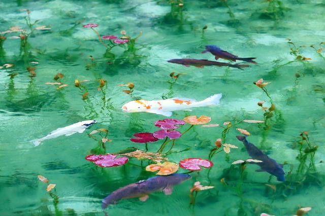 画像: モネの絵画のようだともいわれる「名もなき池」