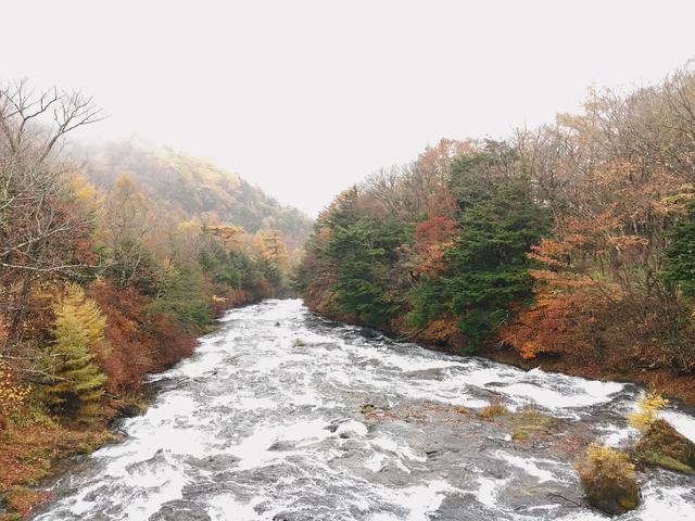 画像: 奥日光のなかでも紅葉を早く迎えることで知られる「竜頭の滝」
