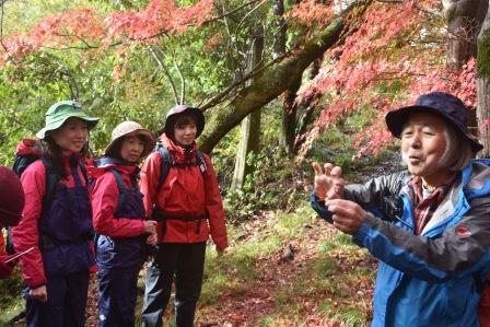 画像: 沿道の植物の解説をする金田ガイド(右)