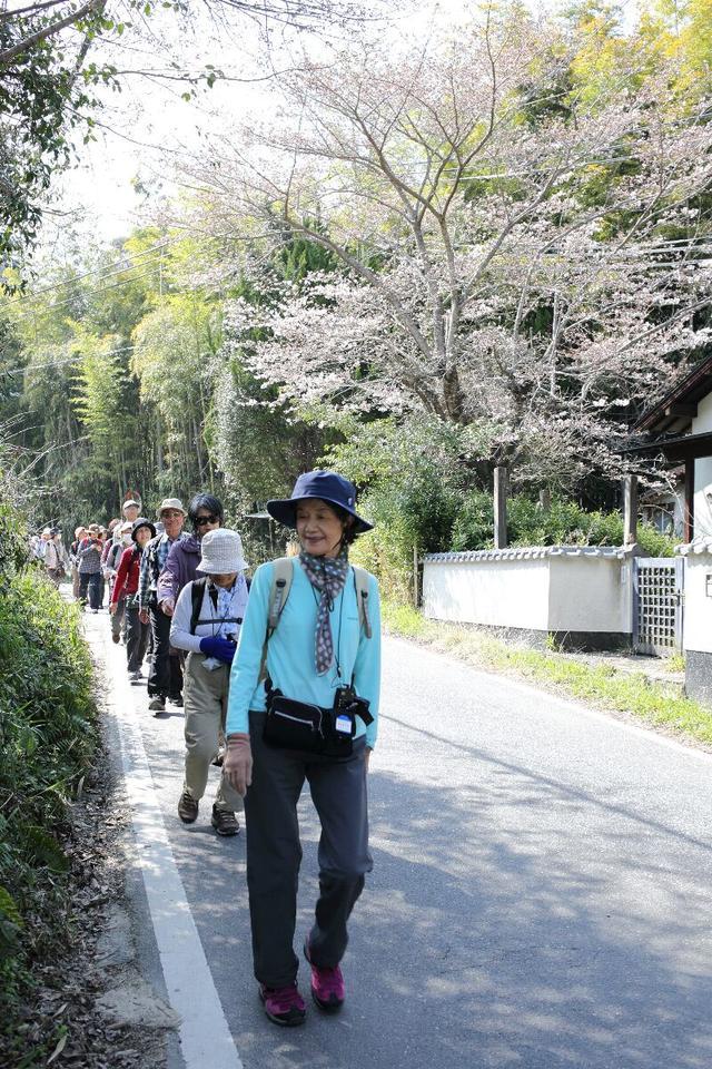 画像: 日当たりや地力の違いでしょうか、梅や桜や木蓮、馬酔木など、春の野に咲くさまざまな花も見ることができました