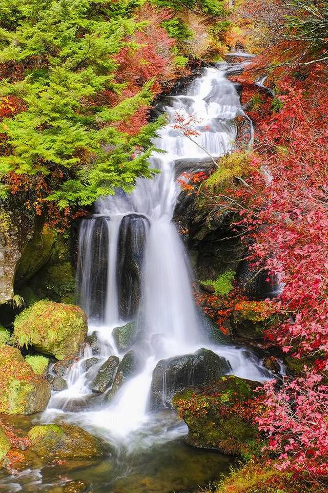 画像: <写真撮影の旅>『山田春子講師同行 紅葉をキレイに表現しよう 奥日光の絶景 明智平と竜頭の滝 日帰り』【上野出発】|クラブツーリズム