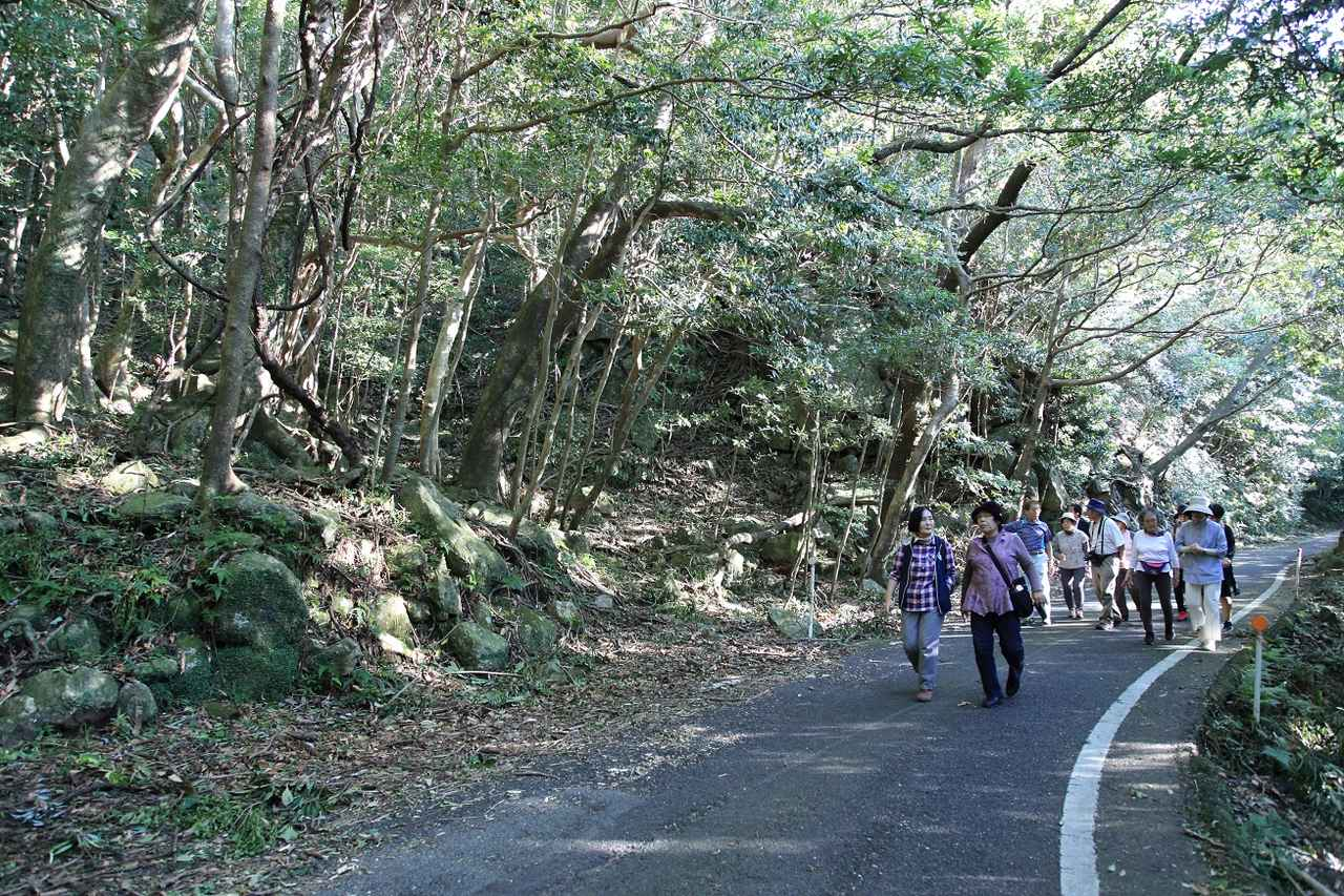 画像: 世界自然遺産に登録された林道の一部区間でバスを下車し、旅仲間とともに歩きました