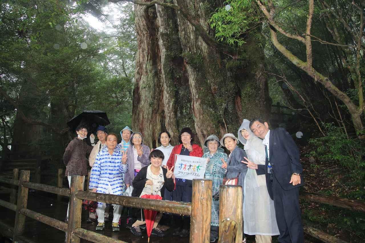 画像: ツアー3日目のみ、あいにくの雨となりましたが、紀元杉の前で旅仲間とともに記念撮影!