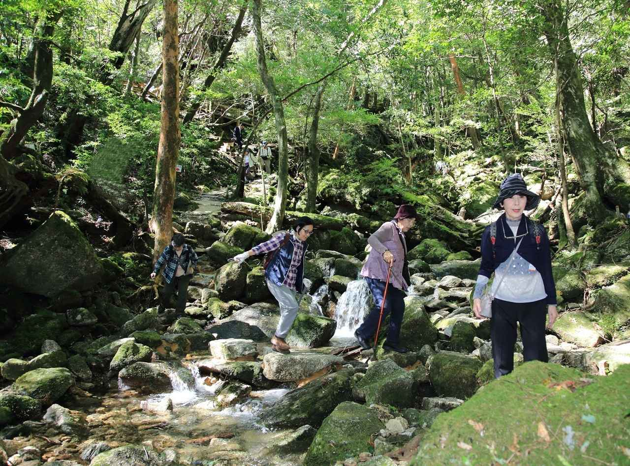 画像: 神秘的な森の中を、お客様それぞれの体力あわせたペースで、じっくりと散策しました