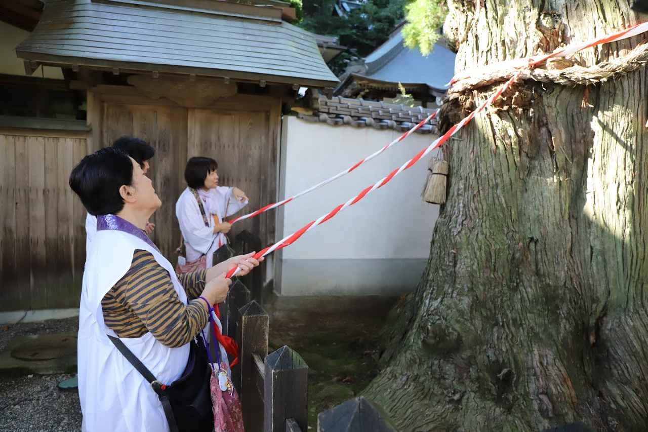 画像: 第2番 極楽寺にある樹齢1200年と伝えられる長命杉。紐に触れると御利益があるとか