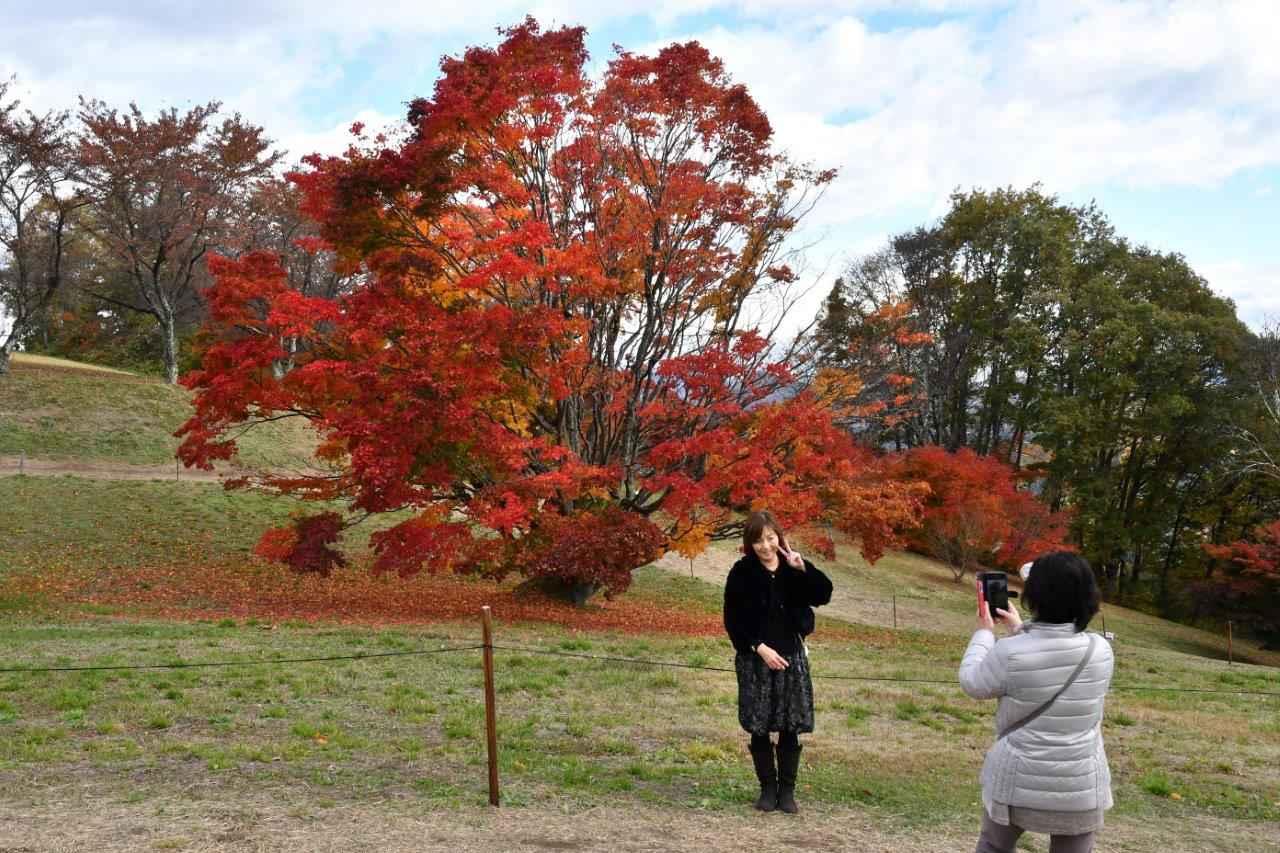 画像: 大峰高原にたたずむ樹齢250年を超える七色カエデ