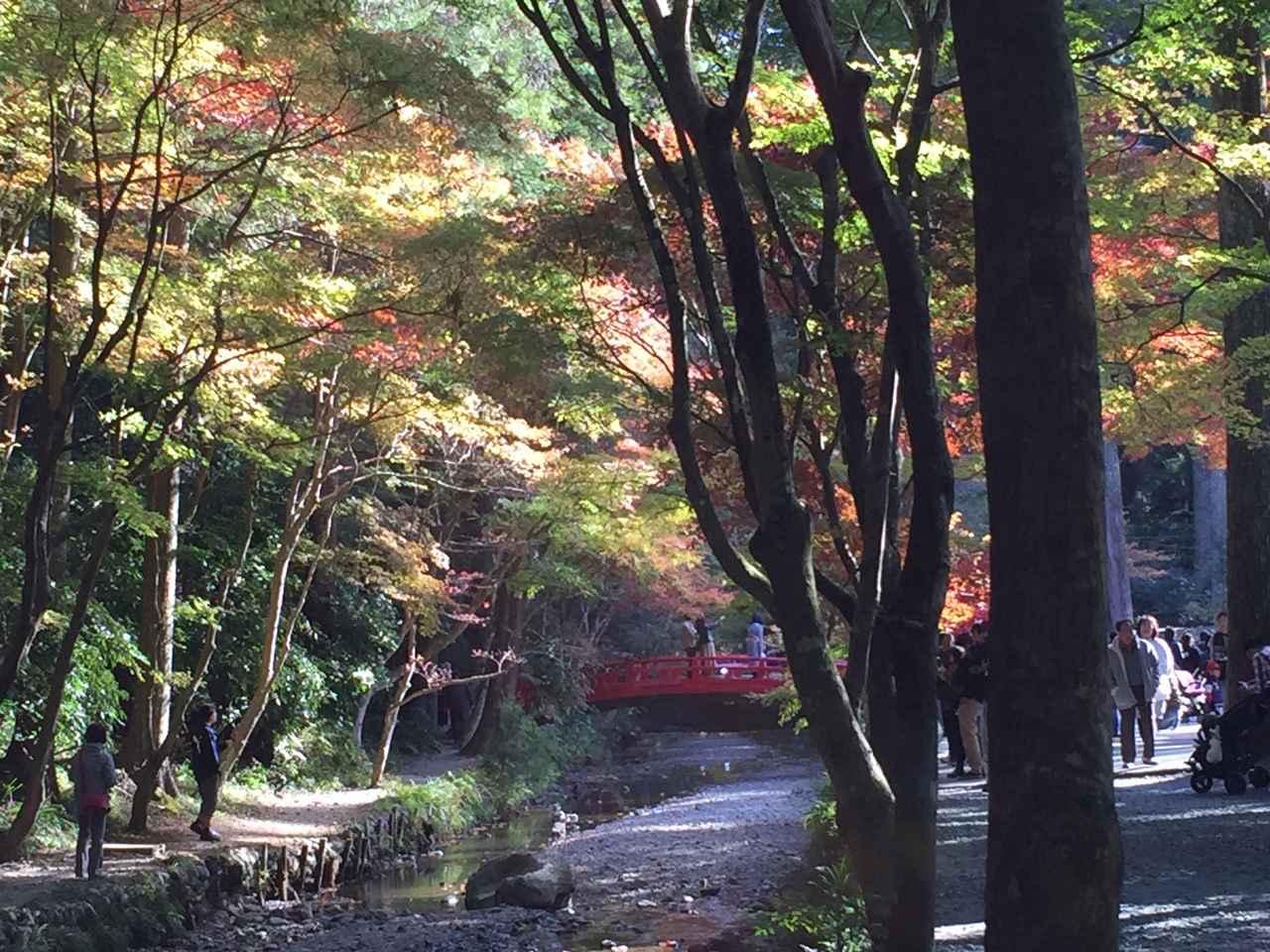 画像: 小國神社の撮影スポット、赤橋と紅葉