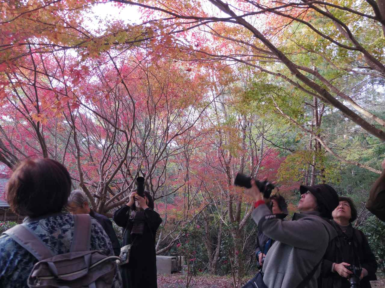 画像: 静岡県立森林公園での撮影の様子