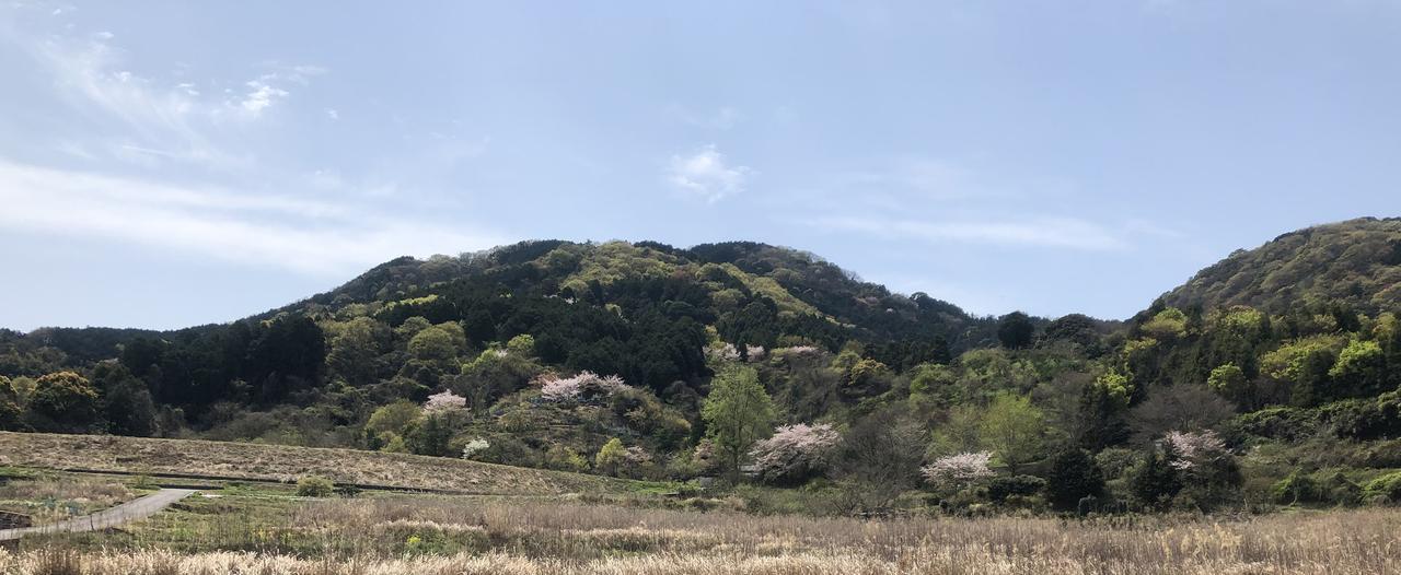 画像: 47番札所 八坂寺からの移動中に出会った桜と新緑の山