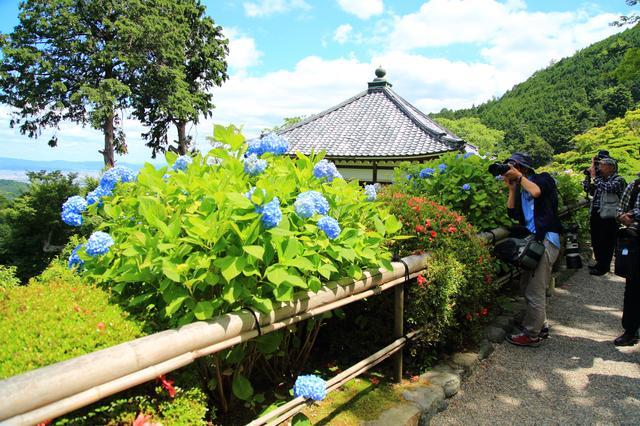 画像: 京都市内を見渡せる花の寺・善峯寺にて撮影