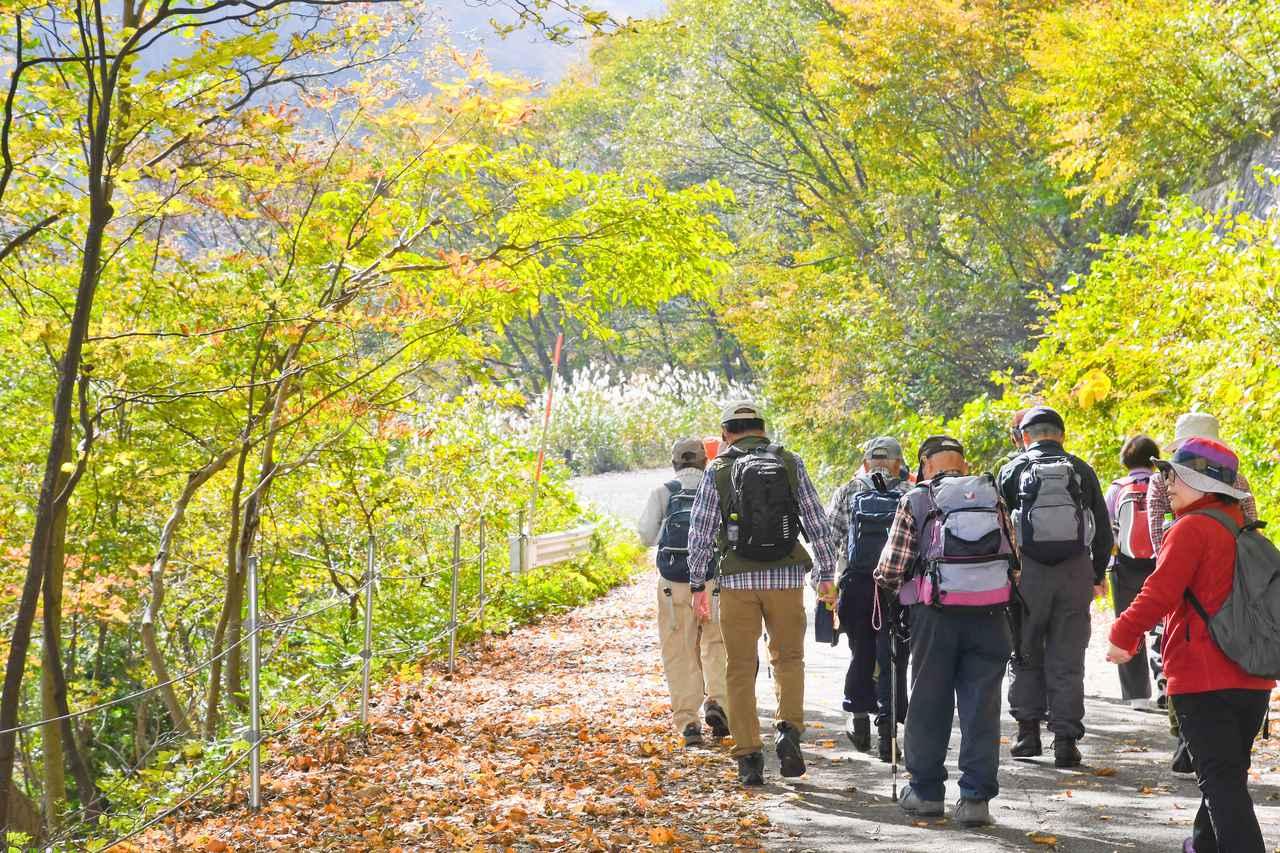 画像: 秋色に染まる山道をゆっくりウォーキング