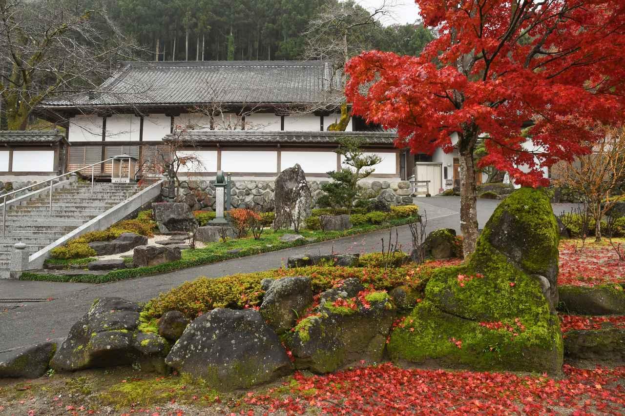 画像: 円融寺の本堂と、お庭の紅葉。「いいタイミングで来られてよかった」との声があがりました