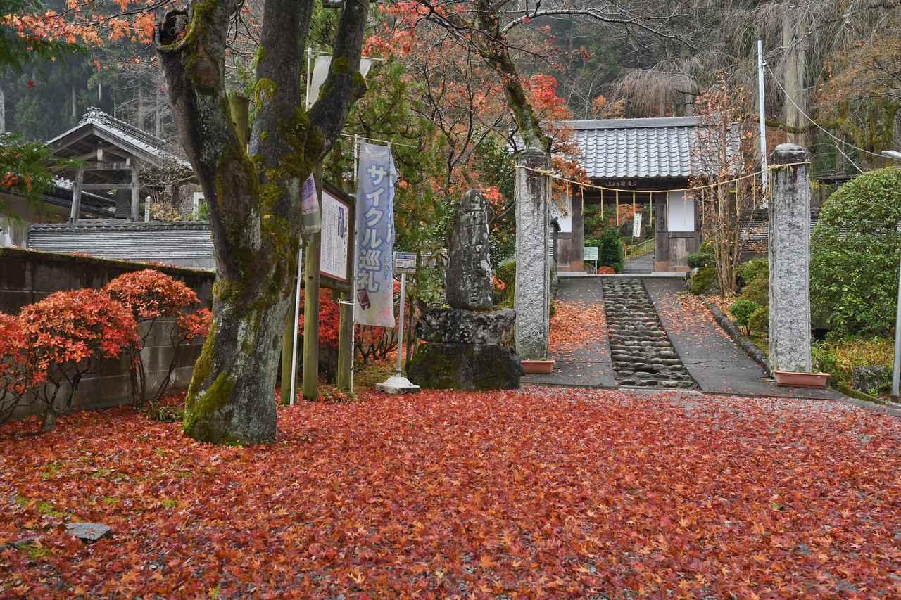 画像: 大渕寺の紅葉のじゅうたんと、立派な山門。山門の頭上には、旅仲間があっと驚く発見がありました
