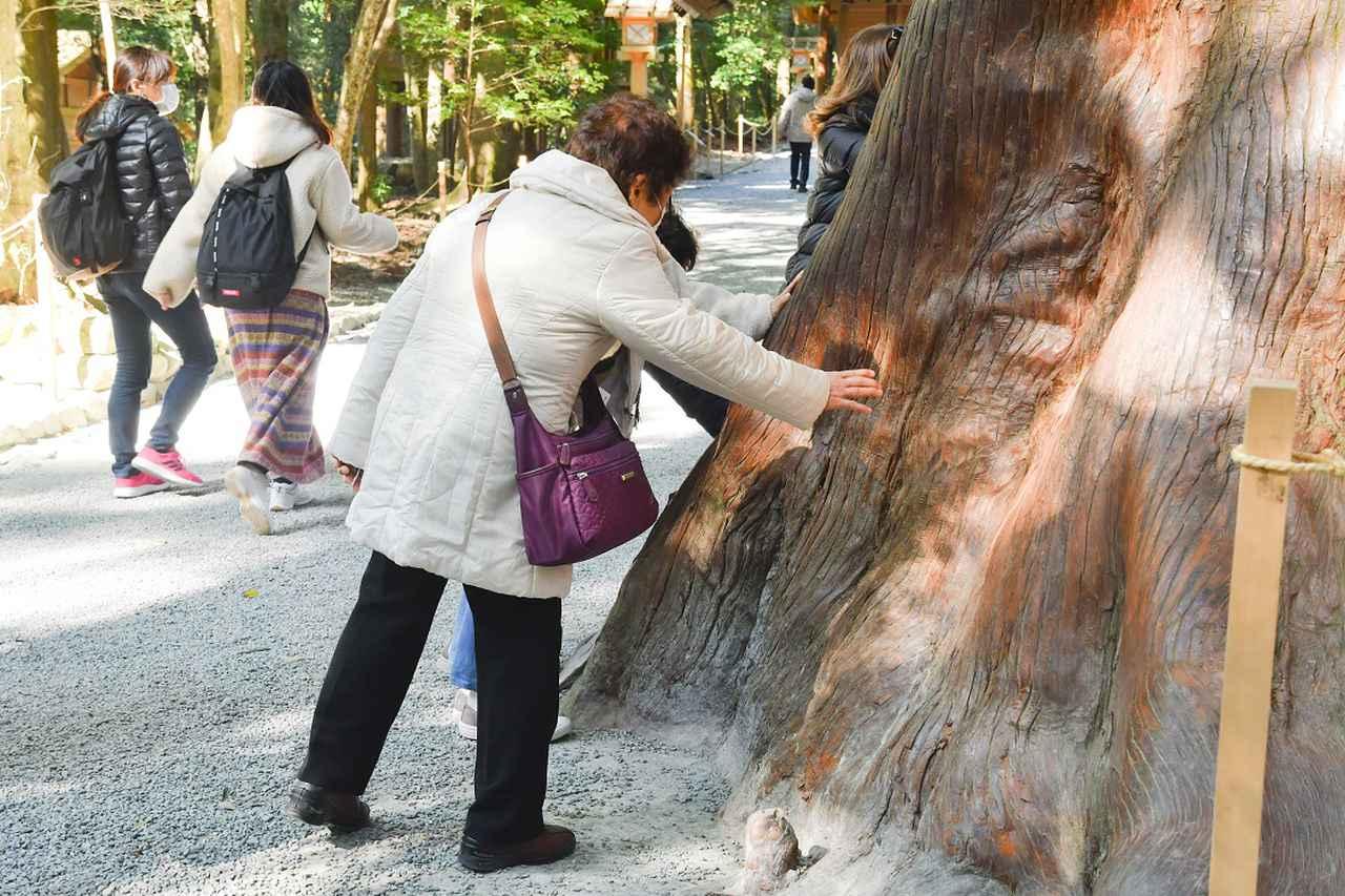 画像: 荒祭宮への参道に立つ神宮杉に手をかざす旅仲間