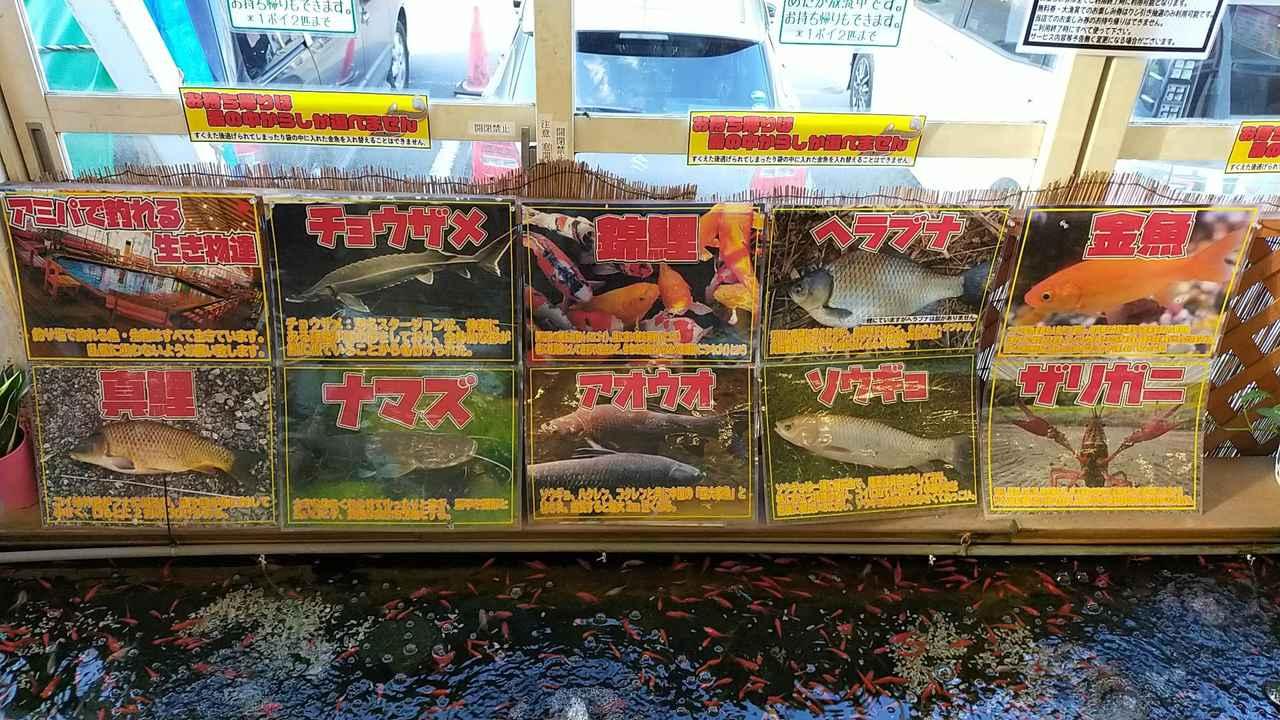 画像: チョウザメ ナマズなども釣れる!?