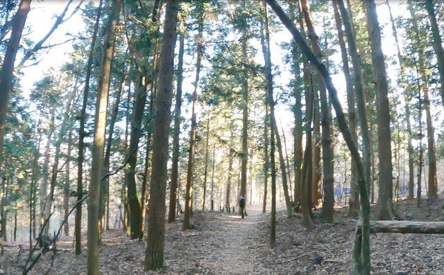画像2: 平野方面からの下山